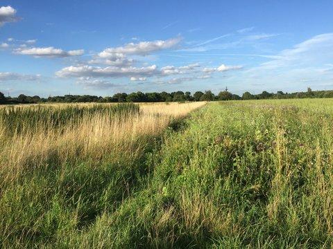 campo agricolo in estate