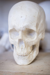 Anatomical gypsum skull, bust, sculpture. Vertical frame