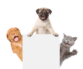 Cat and Dogs peeking above white banner. isolated on white background