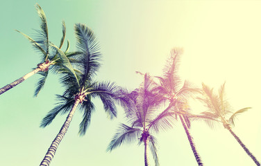Summer Travel Vacation Concept. Beautiful Palms on Blue Sky Background. Toning.