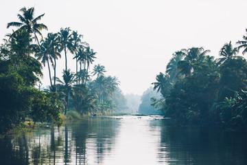 River and jungle with reflection of palm trees on the water. Kerala, India