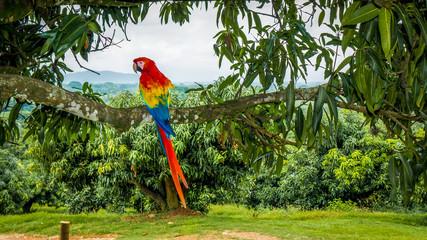 Fotorolgordijn Papegaai parrot