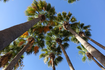 palm tree alley against the blue sky