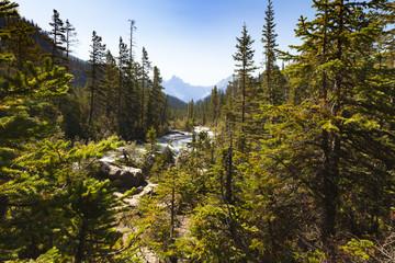 Yoho River view,  Yoho National Park  British Columbia, Canada Wall mural