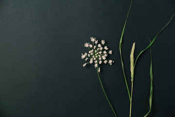 White wild flower and dry herb. Flat lay. Nature concept