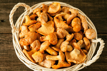 Raw wild mushrooms chanterelle in basket on rustic wooden table