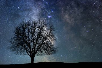 Lonely tree in starry night. Milky way.
