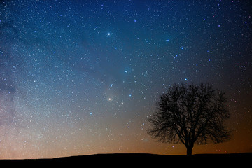 Lonely tree in starry night. Antares region..