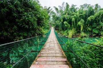 Wooden path and bridge in the rain forest.