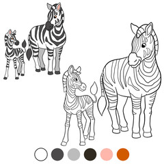 Color me: zebra. Mother zebra with her cute baby.