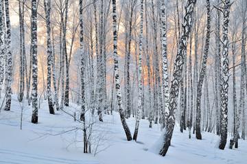 Winter Sunset in birch forest