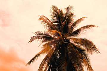 coconut palm tree with retro filter effect