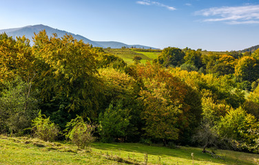 autumnal forest on hills in mountainous countryside