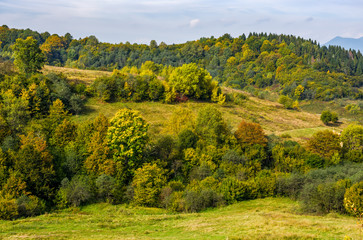 forest on hills in mountainous countryside