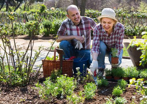Elderly couple gardening in the backyard.