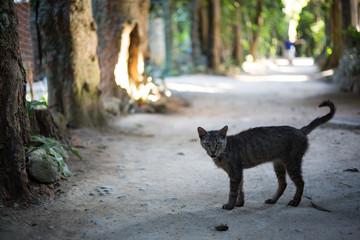 野良猫 フクギ並木