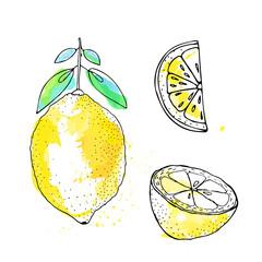 Sketch of lemon in ink, watercolor style