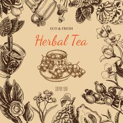 Vector illustration sketch card - herbal tea - berry , wild rose, linden, mint, chamomile, Jasmine, Soursop, lemon, bergamot, viburnum, snowball.