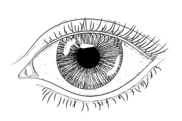 Woman eye. Hand drawn sketch. Vector illustration isolated on white background