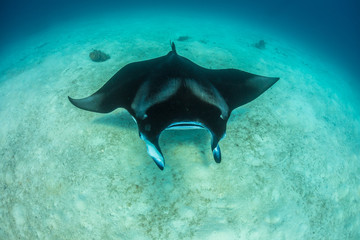 Mantaray underwater world