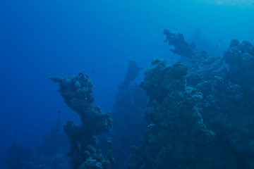Dark misty underwater environment with dead reefs