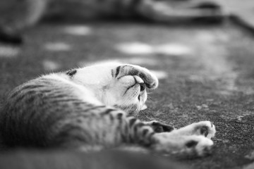 Cat covers its eyes with hand : Monochrome