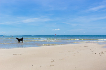 Sea side view :ビーチ・波打ち際で遊ぶ犬