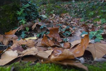 Hojas secas en el suelo con musgo