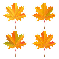 Set of realistic orange maple leaves. Autumn vector illustration.