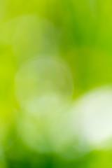 Beautiful green bokeh nature as background.