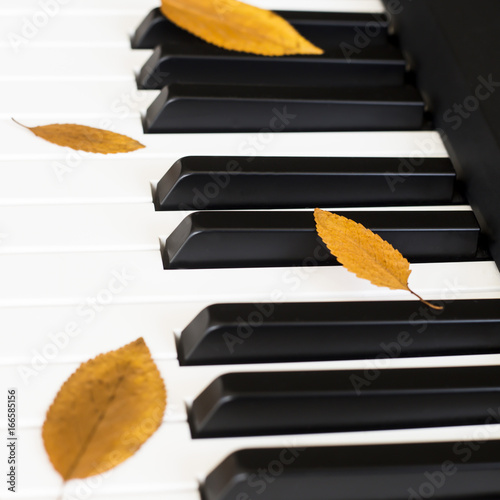 Yellow autumn leaves on the piano keys  Background