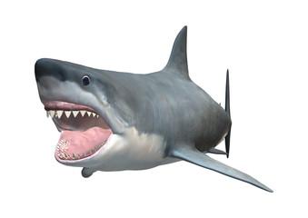 3D Rendering Great White Shark on White
