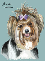 Colorful hand drawing vector portrait of Biewer terrier