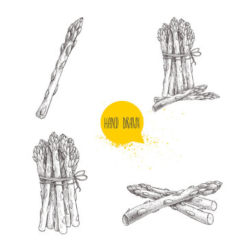 Hand drawn sketch style set of asparagus. Single, bunch and composition.