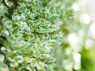 Close up green leaves of small plant on vertical garden.