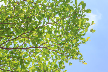 Branch and green leaf