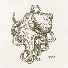 Octopus. Engraving. Vintage style. Vector illustration.