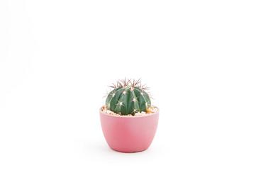 Photo sur Aluminium Cactus Cactus in the pot isolated on white background.