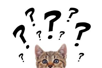 chaton avec dessins points d'interrogation