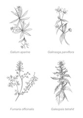 botanical set of flowers drawing