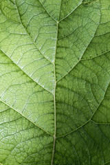Texture of a green leaf as abstract background macro plant pattern