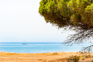 Distant ship on the horizon with yellow grass and a pine tree in the foreground. Portugal view of atlantic coast.