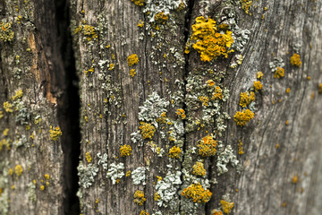 texture of dark wood. natural background.