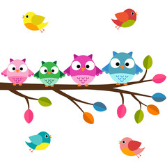 Four owls on a branch with birds