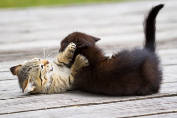 Two little kittens playing