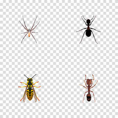 Realistic Spider, Bee, Emmet And Other Vector Elements. Set Of Insect Realistic Symbols Also Includes Emmet, Spider, Wisp Objects.