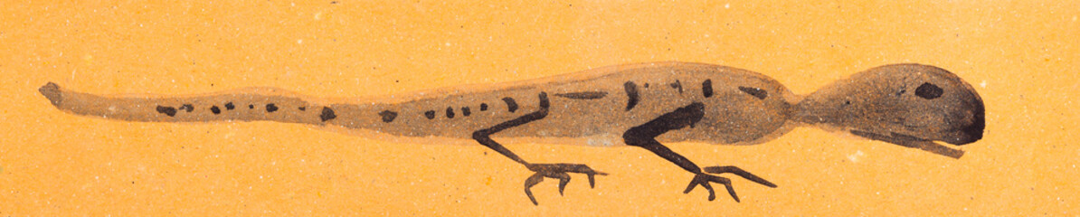 sketch of lizard on orange colored paper