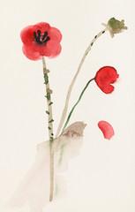 sketch of red poppy flowers