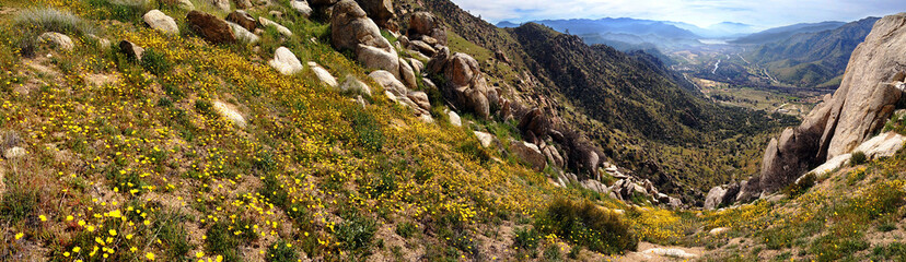 Wildflowers on Powers Peak above Kern Valley