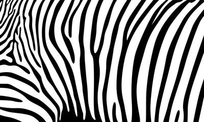 Realistic abstract zebra skin pattern vector illustration
